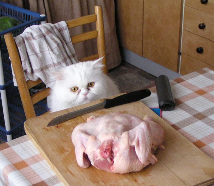 Kočka, nůž a kuře
