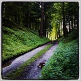 Léto v lese